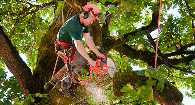 Don't Take Chances and Contact a Tree Removal in Beverly Hills