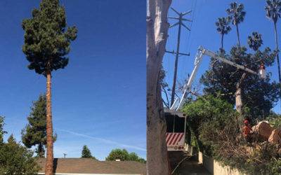 Tree Removal Service Company in LA